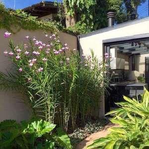 Orquídea Bambu: Aprenda Como Plantar e Cuidar em 6 Passos