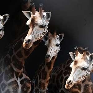 A surpreendente maneira como os animais compreendem os ...
