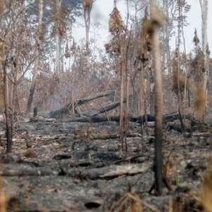 """""""Monitoramento da Amazônia corre risco real sob Bolsonaro"""""""