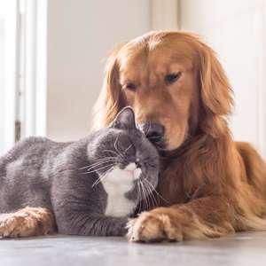Saiba como limpar pelo de cachorro e de gato da casa e das roupas