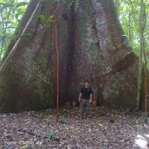 Dia da árvore: 14% das espécies do mundo estão no Brasil