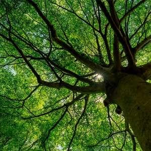 Dia da Árvore: entenda a importância de preservar esse ...