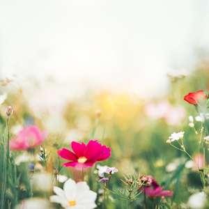 Primavera: O que é o equinócio, que marca o início da ...