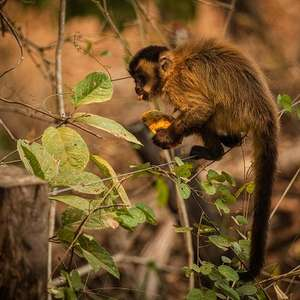 As imagens da luta dos animais pela vida no Pantanal em chamas