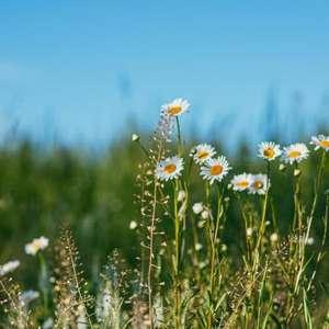 Conheça o Mito de Deméter e a Primavera