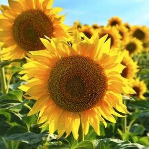 Flores dos signos: descubra a sua para atrair sorte e positividade