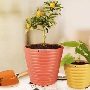 Cinco passos para cultivar árvores frutíferas em vasos