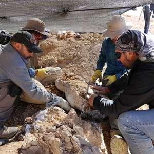 Restos de predador de mar jurássico é encontrado no ...