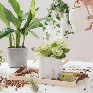 Plantas que afastam mosquitos: 7 opções para você ter em casa