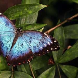 Veja as mensagens espirituais que as borboletas transmitem