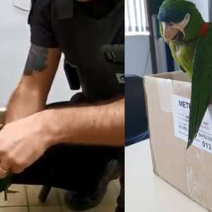 Segurança do metrô de SP reanima papagaio com massagem ...