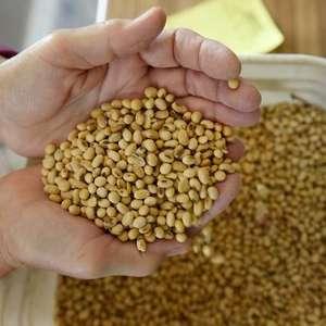 Plantio de soja em Mato Grosso já tem atraso por falta ...