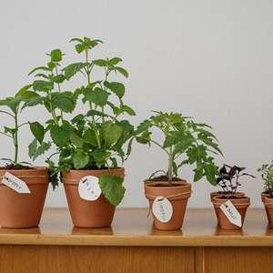 Plantas que combatem o estresse ideais para ter na casa