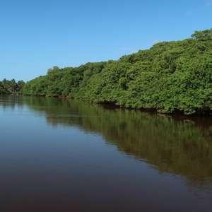 A importância dos manguezais, que ficam desprotegidos ...