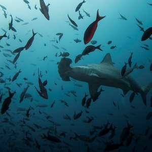 Malta pede devolução de dente de tubarão dado a príncipe britânico