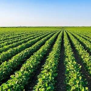 Plantas daninhas: problema nos campos que derruba ...