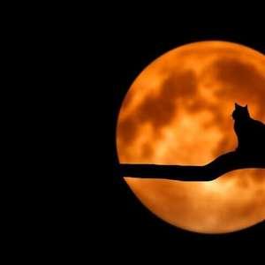 Fases da Lua: Saiba como aproveitar cada uma delas