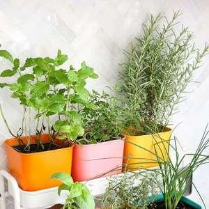 Horta Orgânica: Veja seus Benefícios e Dicas para Fazer ...
