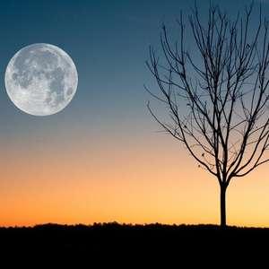 Confira como a Lua influencia o crescimento das plantas