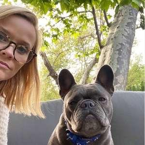 Reese Witherspoon lamenta morte de sua cadela: 'coração ...
