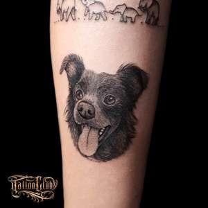Pet lovers: tatuagens de animais de estimação são um ...