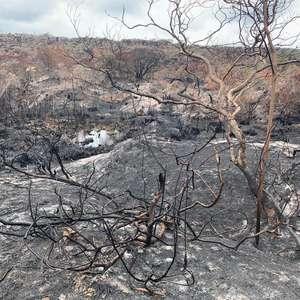 Produtores baianos apoiam combate a incêndios na Chapada