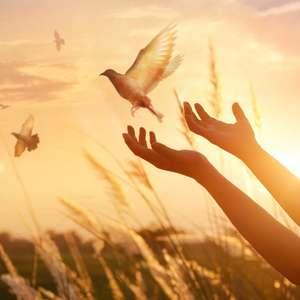 Simpatias para atrair paz e tranquilidade em momentos ...