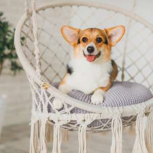 Pets e decoração: saiba como adaptar a casa para o ...