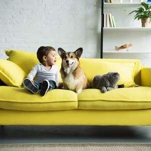 Cuidado com a casa: quando a limpeza profissional torna- ...