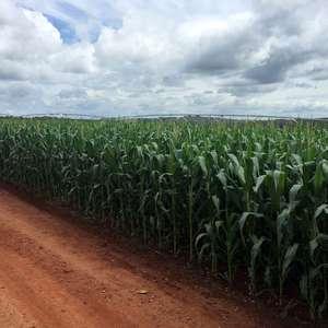 Safras & Mercado eleva projeções para colheitas de soja ...