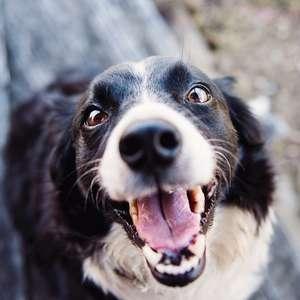 Animal de estimação tem cárie? Descubra se é mito ou verdade