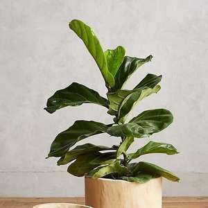 Vaso de Madeira: +60 Ideias para Encher sua Casa de Plantas