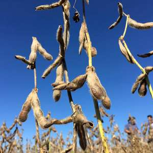Chuva prevista para RS deve impulsionar plantio de soja, ...