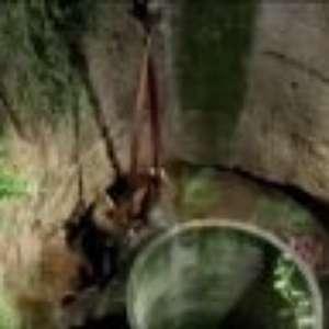 Elefante que caiu em poço de água é resgatado com guindaste; assista