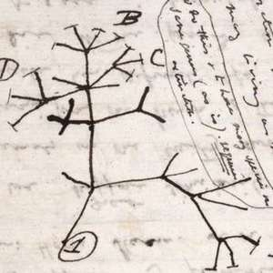 Universidade denuncia que cadernos de Darwin foram roubados