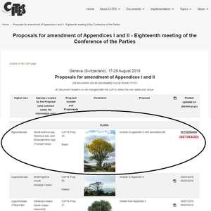 Governo Bolsonaro rejeita parecer técnico ao excluir ipê de monitoramento internacional
