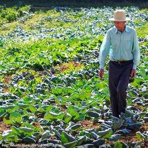 Produção local de legumes e verduras pode alimentar 20 ...