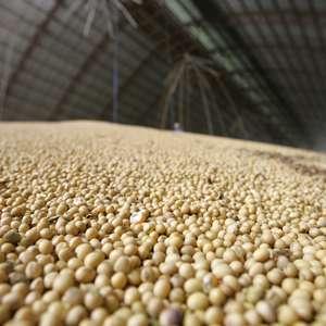 ARC Mercosul reduz previsões para soja e milho 20/21 do ...