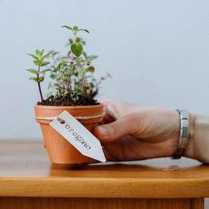 Poder místico do orégano: a planta da felicidade