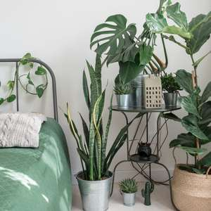 Cuidados com as plantas no calor: 7 dicas simples para o ...
