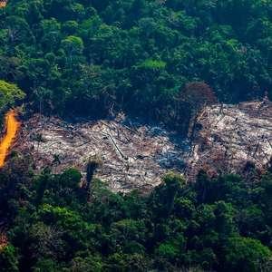 Desmatamento: as imagens de satélite que apontam ligação ...