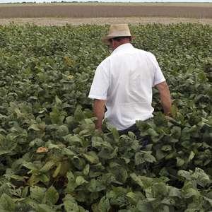 Na reta final, plantio de soja avança pouco em MT na semana