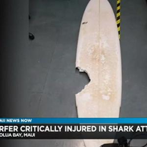 Surfista amador atacado por tubarão morre no Havaí
