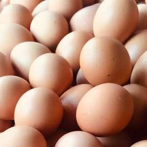 8 dados interessantes sobre os ovos, um dos alimentos mais nutritivos do mundo