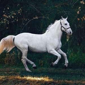Símbolos da sorte: conheça os animais que atraem sorte