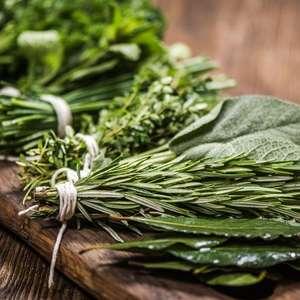 Muito mais do que tempero: Ervas também servem como remédio