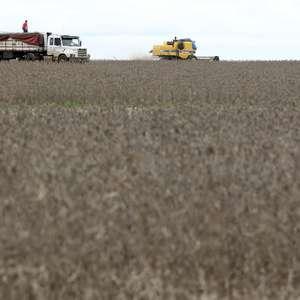 Vendas de soja desaceleram em MT mas seguem acima da ...