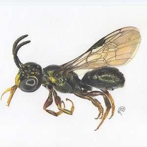 Nova espécie de abelha é descoberta em fazenda modelo de ...