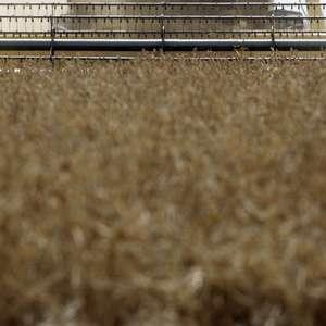 Colheita de soja atinge 2,23% da área em MT; plantios de ...
