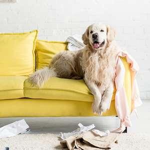 Cachorro bagunceiro: confira dicas de como educar seu pet